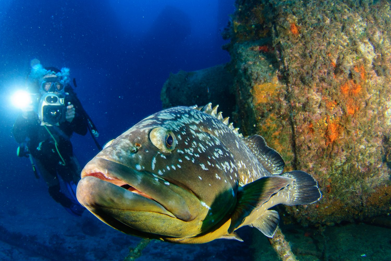 Photo © by Scuba Ibiza Diving Center