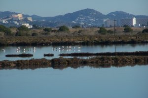 Better life for birds in Ibiza