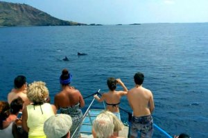 Balearic highway for whales and dolphins