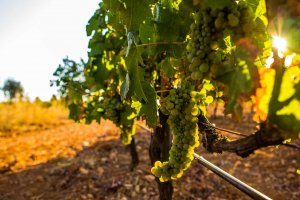 Tasting the Real Ibiza with Bodegas Can Rich