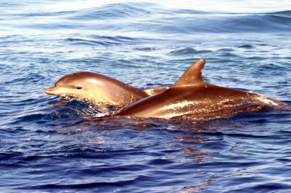 New on the site, dolphin excursions!