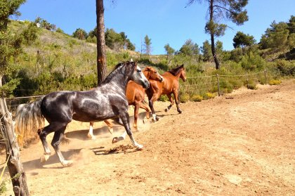 Activity Board: horse riding in the Ibiza countryside
