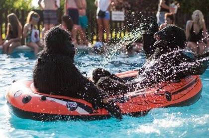 Zoo Project Hits the Water with Noah's Ark